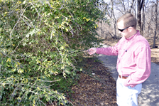 Little Fossil Creek project manager, Lee Epperson, inspects a privet bush outside the mitigation area of the Little Fossil Creek project site. Privet is an invasive species which is native to Europe, the Mediterranean, Asia and Australia.
